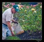 20110909 TGS_3738 Lakeview Rose garden